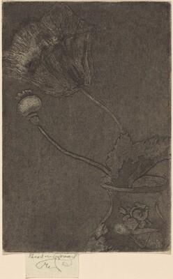Poppy in a Vase