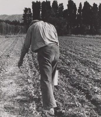 Untitled (Farmer in Field)