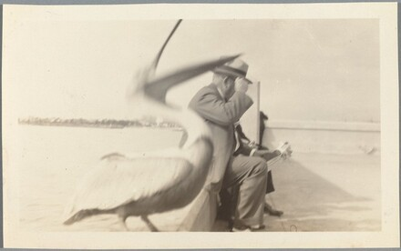 Untitled (Pelican and man seated by water)