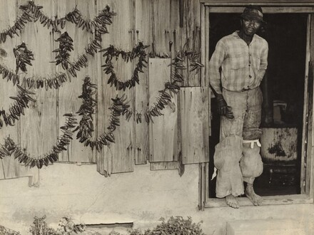 Tobacco Picker, Rocky Mount, North Carolina