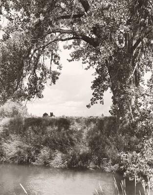An irrigation canal, Larimer County, Colorado