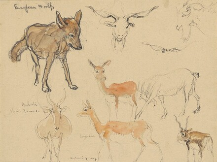 Eight Sketches of a Wolf, Goat, and Antelopes