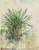 Tropical Plant [recto]