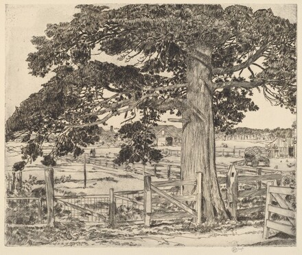 The Big Cedar