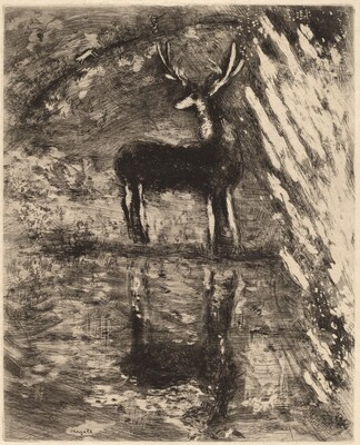 The Stag Viewing Himself in the Stream