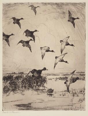 Flock of Ducks Landing