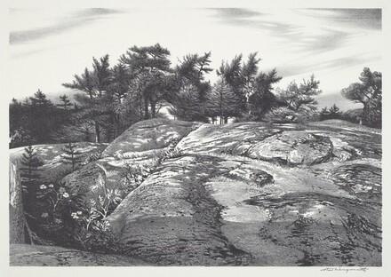 Woodland Ledge