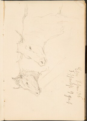 Zwei Studien eines Ochsenkopfes, Notizen  (Two Studies of a Bullock's Head, Notation) [p. 9]
