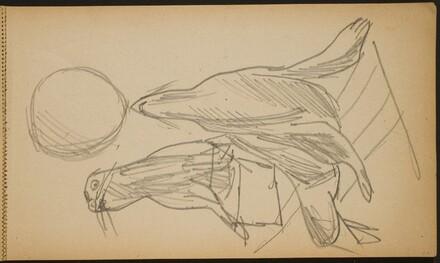 Zirkusnummer mit zwei Seelöwen (Two Performing Sea Lions) [p. 23]