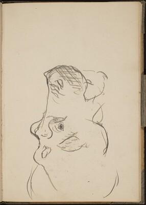 Nilpferdkopf im Profil (Hippo Head in Profile) [p. 17]