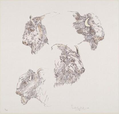 Buffalo Heads