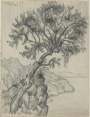Carruba Tree (Ravello)