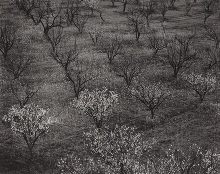 Orchard, Portola Valley, California
