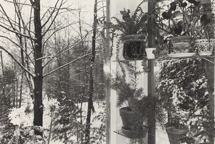 Wall of Potted Plants and Trees (Putney, Vermont, 1972)