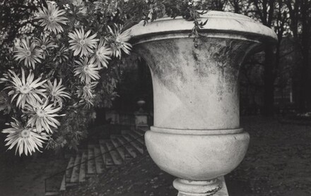 Chrysanthemums in Garden Pot (Luxembourg Gardens, Paris, 1972)