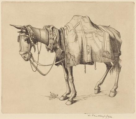 Spanish Mule
