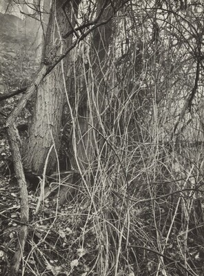 Untitled--Thicket