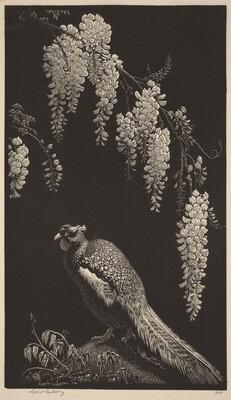 Pheasant and Wisteria