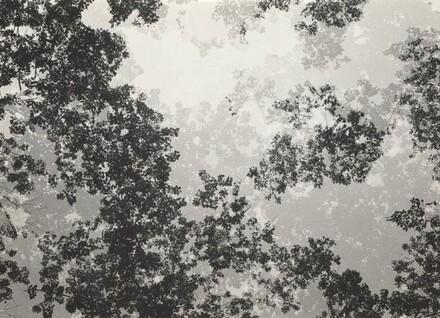 Multiple Exposure Trees