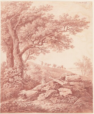 Ancient Trees in a Pastoral Landscape