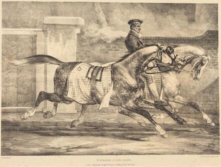 Horses Exercising