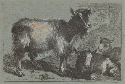 Goat and Two Kids