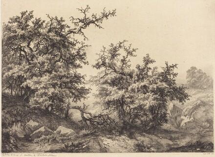 Thornbushes