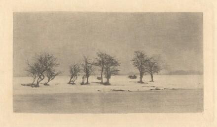 Gnarled-Thorn Trees