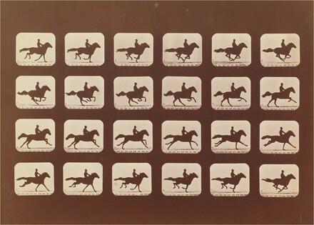 Horses. Running. Phyrne L. No. 40