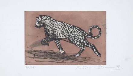 Little Leopard