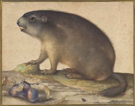 A Marmot with a Branch of Plums