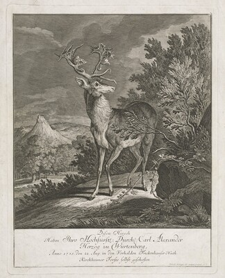 A Magnificent Stag in a Landscape