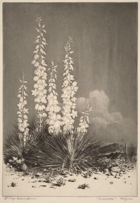 Soapweed, Arizona (No. 2)