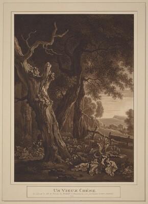 Ancient Oaks in a Landscape
