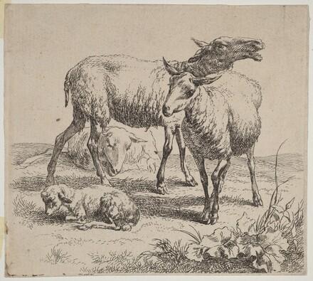 Three Sheep and a Lamb