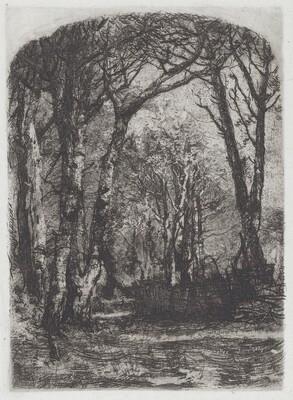 Woods [Bosco]