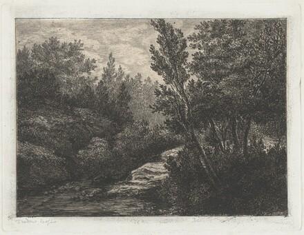 Selva (Woods)