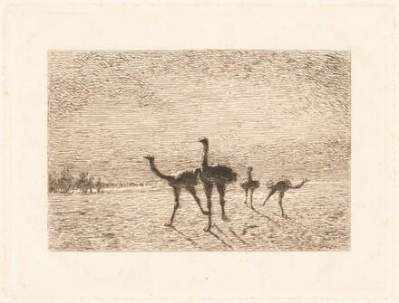 Ostriches in the Desert
