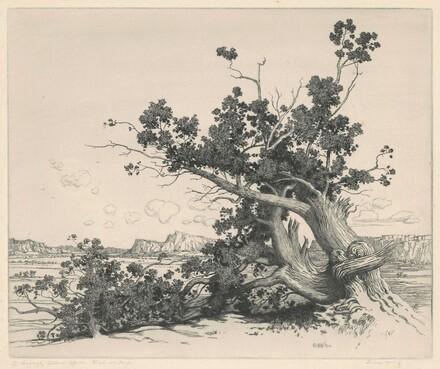 Desert Cedars (New Mexico)