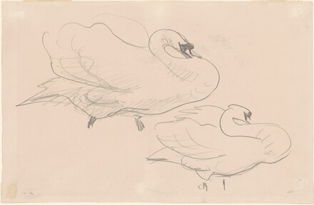 Two Studies of a Swan