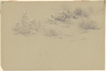 Flowering Bush and Desert Plants