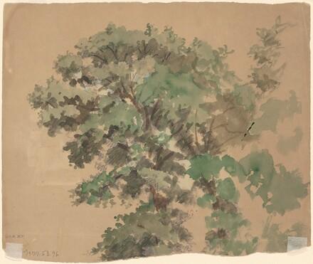 Tree [verso]