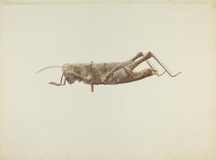 Grasshopper Weather Vane