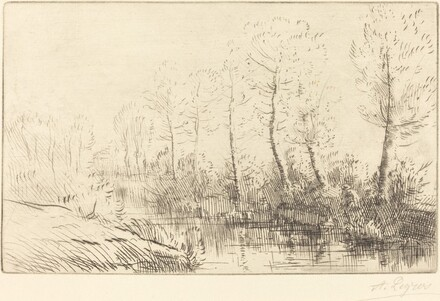 Birch Trees: Water's Edge Seen in Morning Light (Les bouleaux: Bord de l'eau, effet du matin