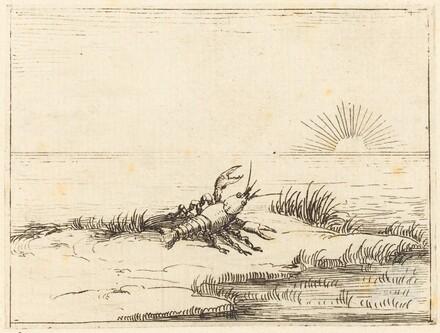 Crayfish Looking at the Sun