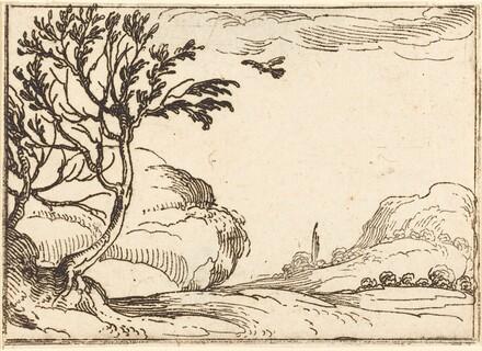 Turtle Dove Flying in the Desert