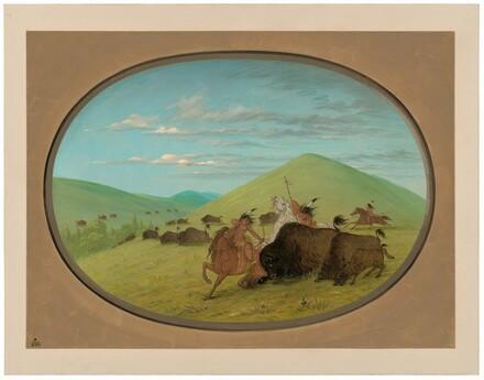 Buffalo Chase - Bulls Protecting the Calves
