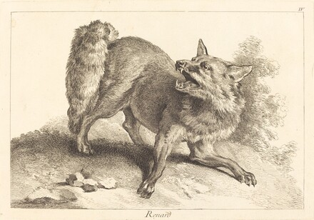 Renard (Fox)