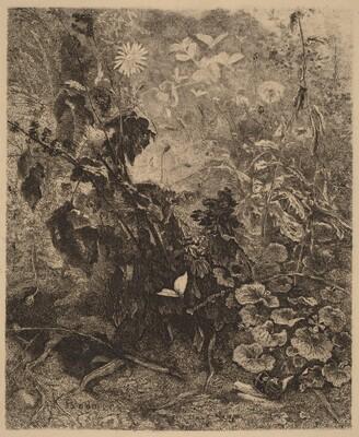 Escargots et papillons
