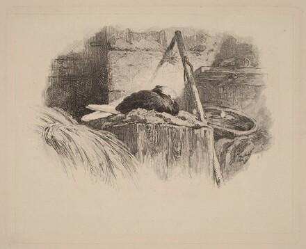 Pigeon sur un nid